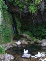 Briance Waterfall and swan 1 by HermitCrabStock