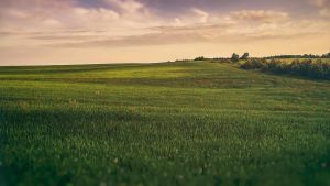 The Green Field by Binary-Map