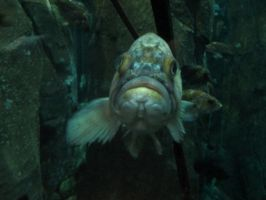 Fish 5 -- Sept 2009 by pricecw-stock