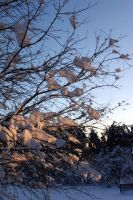 light snow tree sunset by oldsoulmasquer