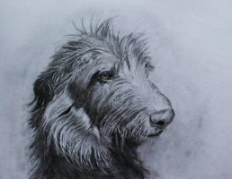 Scotish Deerhound by Anbeads