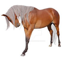 Premade Horse by looserfaceman
