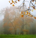 Autumn view... _48_ by my-shots