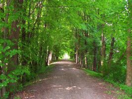 Tree Covered Lane by jerrinator