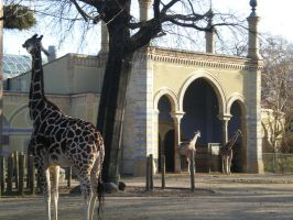 Berlin Zoo by Z-Designs