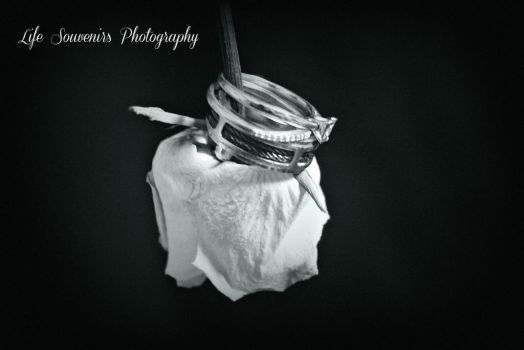 Stem Rings by Pammiesphotography