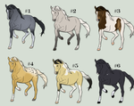 BLM Mustang Adoptables by Copper-Coyote-Ranch