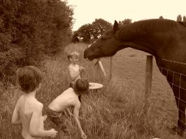 Feeding the horses by carrsa