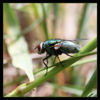 Green Fly by Globaludodesign