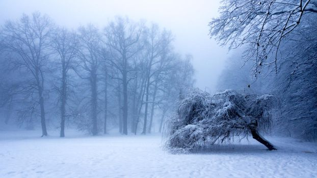 Silent Winter by lf
