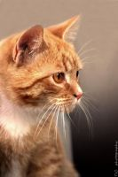 Kitten's thoughts by TlCphotography730
