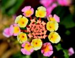 Pink, Yellow and Red Flowers by Crixans