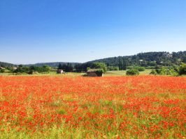 poppy field and horse by redkojimax