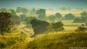 Romanian savanna by AlecsPS