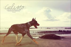 calisto by renderedsublime