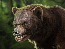 Old Baldy - Bear Character by ablaise