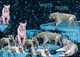White Tigers by storm347