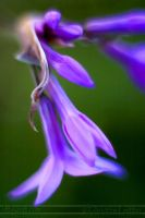Purple flower things macro by littlegett