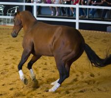 STOCK - 2014 Total Equine Expo-111 by fillyrox