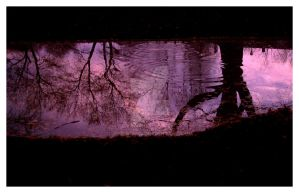 Violet Waterscape by JenFaulisi