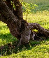 Still life in the old tree yet by gwilym