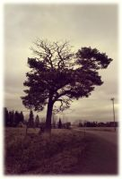The lonely tree by Skycode