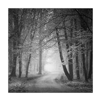 Magic forest old by manroms