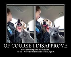 Cat Disapprove Of Dog Human Interaction01 by kclcmdr