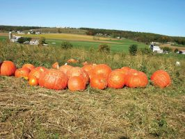 Giant Pumpkins by FairieGoodMother