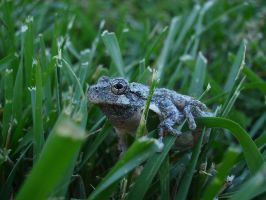 Tree Frog 14 of 24 by celticmaiden7