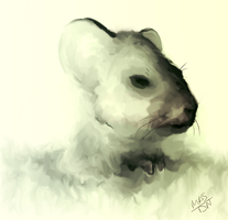 Mouse by DenNami