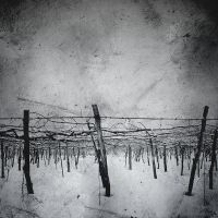 vinyards 3 ::: by aopan
