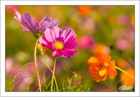 Nature is Beautiful by sG-Photographie