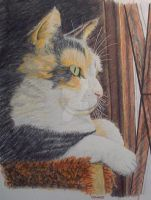 Daisy At Her Window--colored Pencil by artwrkx