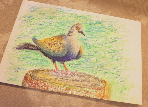 Turtle Dove by femalefred