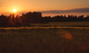 fields of the setting sun 06 by Katyma