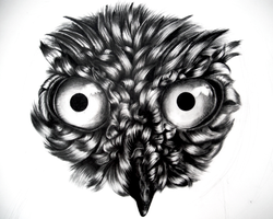 Owl Drawing WIP Stage 3 by icee-bleu