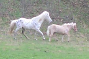 Horses- White and Brown by Della-Stock