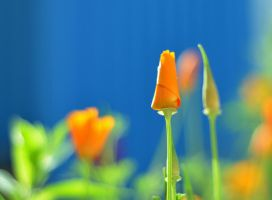 composition in blue and orange by runningbackandforth
