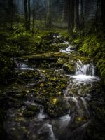 Steady Flow by Floriarty