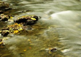 Leaves and rocks in the river by yanshee