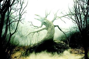 Sleepy Hollow - tree by nylfn