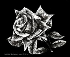 Rose In Black by Ludifico