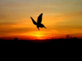 Sunset Butterfly by Anarth