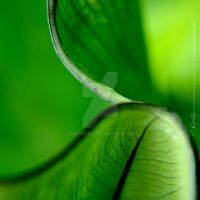 Curvature Leaf by RedChiew