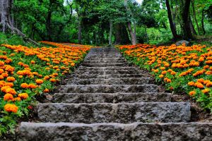 Path by cansan