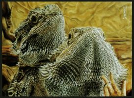 Bearded Dragons by klukart