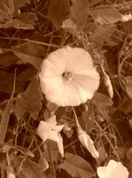Little Flower sepia 2 by MasterTeska