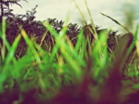 Through the grass. by TheArts-Are-MyLife
