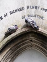 just pigeons by bradhulley